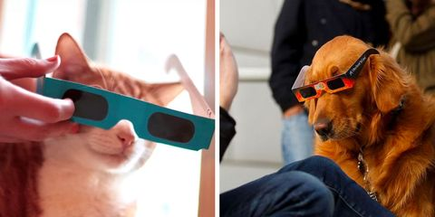 dogs and cats wearing eclipse glasses