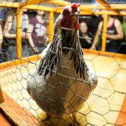 Chicken Shit Bingo At Little Longhorn Saloon in Austin Texas