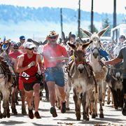 burro-racing-colorado