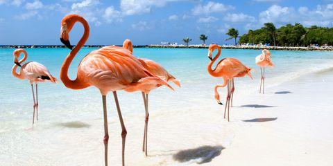 aruba-flamingo-island