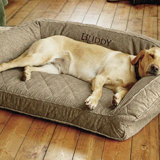 orvis memory foam best dog bed ever