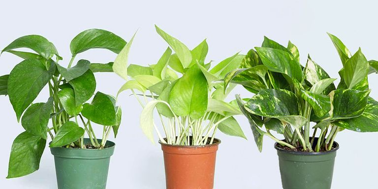10 Best Indoor Plants for Your House - Indoor House Plants to Buy in ...