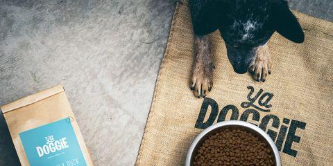 ya doggie smart scoop