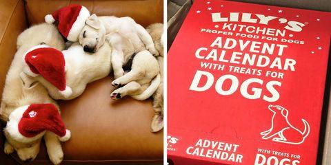 Christmas Advent Calendar For Dogs 2017