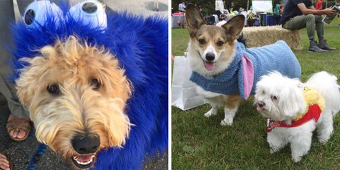 Pet Pride Day in San Francisco has dogs, cats, and more up for adoption