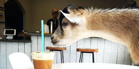 Civil Goat Coffee in Austin, Texas