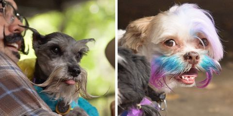 Fourth Annual Dog Beard and Mustache Competition in Austin, Texas on October 2017