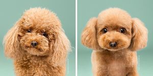 Dogs Before and After Haircuts