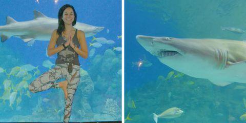 The Denver Aquarium offers a Yoga with Sharks