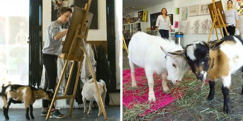 Hello Critter offers figuring drawing, writing, and yoga with goats
