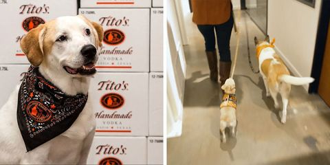 Tito's Vodka in Austin, Texas rescues dogs and lets their employees brings their dogs to the office