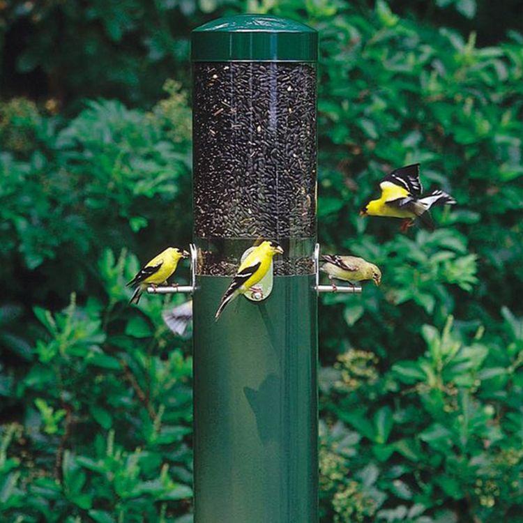 Birds Choice Steel Squirrel-Resistant 1.2 Tube Bird Feeder