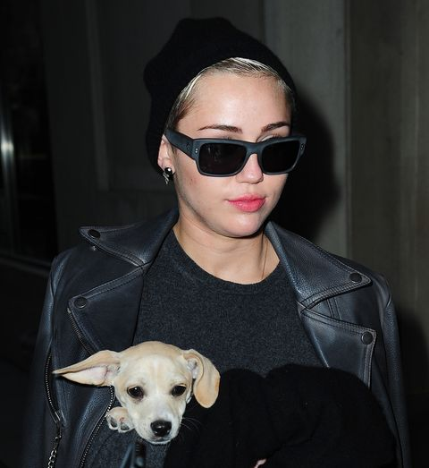 Eyewear, Vision care, Dog breed, Glasses, Sunglasses, Jacket, Carnivore, Dog, Outerwear, Goggles,