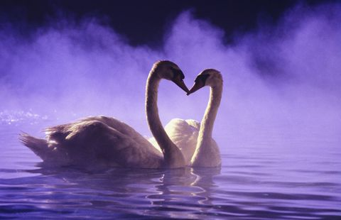 Liquid, Nature, Fluid, Daytime, Atmosphere, Water resources, Atmospheric phenomenon, Purple, Bird, Violet,