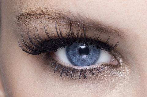 Blue, Brown, Skin, Eyelash, Eyebrow, Iris, Eye shadow, Violet, Amber, Colorfulness,