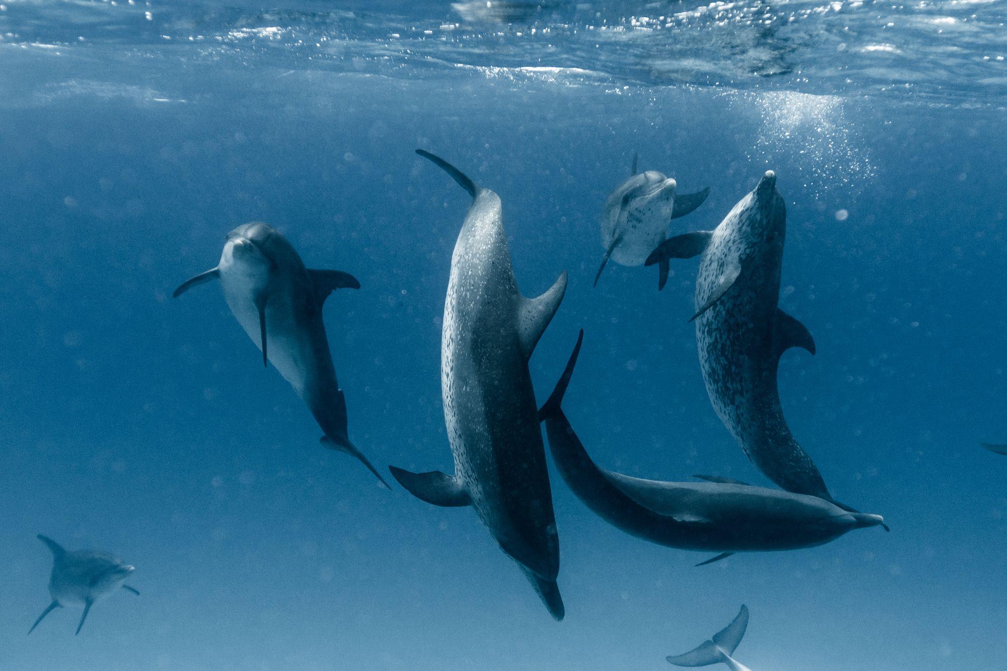Delfini sesso gay