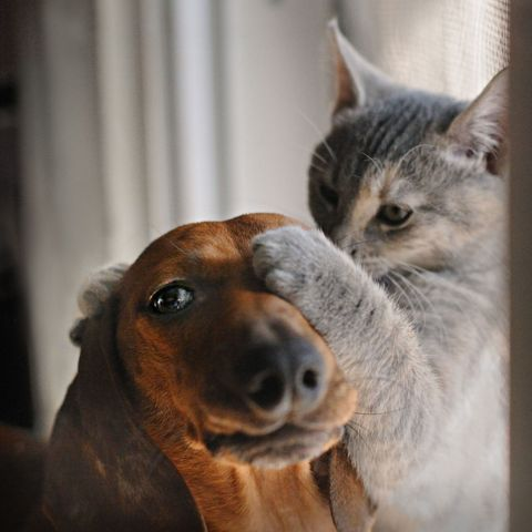 Whiskers, Carnivore, Dog breed, Small to medium-sized cats, Felidae, Snout, Cat, Iris, Dog, Liver,