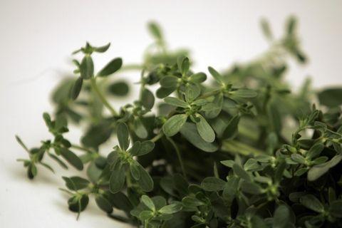Mai sentita? È una pianta molto diffusa nei Paesi mediterranei, ricca di acidi grassi e omega 3. <strong>Cento grammi di foglie contengono quasi 350 mg di acido α-linolenico, ovvero gli acidi grassi che aiutano a ridurre il colesterolo Ldl, quello cattivo.</strong> Inoltre, è ricca di pectina e fibre solubili, le stesse della famosa crusca d'avena della <strong>dieta Dukan</strong>. Mangiala nell'insalata, somiglia alla rucola!