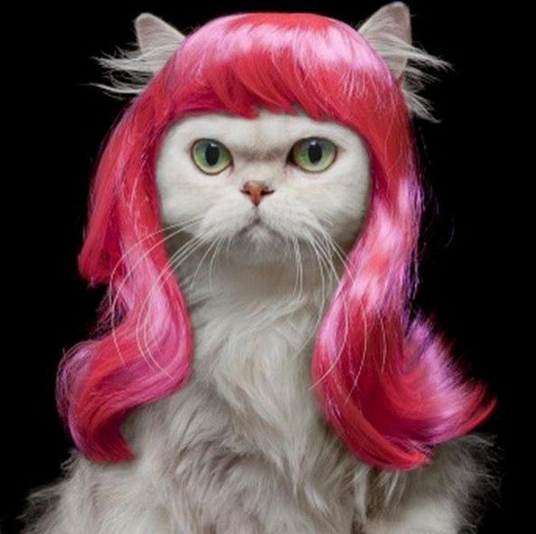 gatti-parrucche-15.png