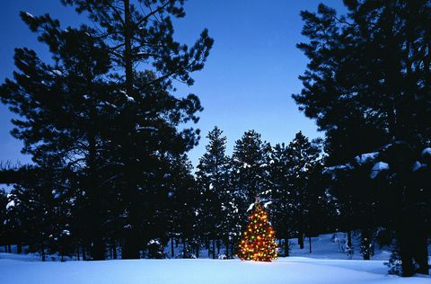 CHRISTMAS TREE IN PINE FOREST IN SNOW IN NORTH ARIZONA
