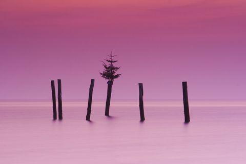 Fir tree on pole, Fehmarn Island, Baltic Sea, Schleswig-Holstein, Germany