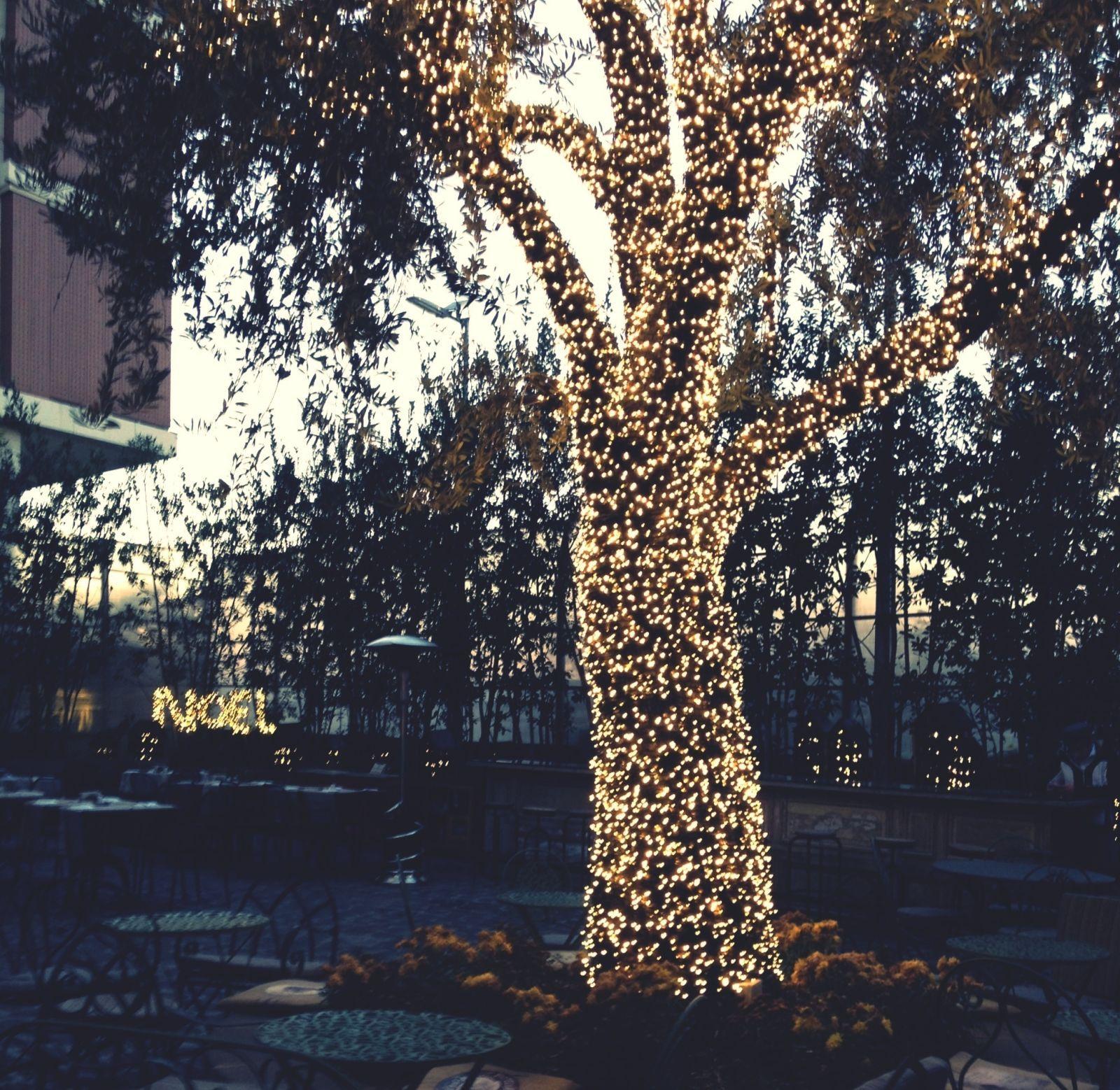 Per chi avesse un giardino con qualche albero con luci da esterno e una  prolunga