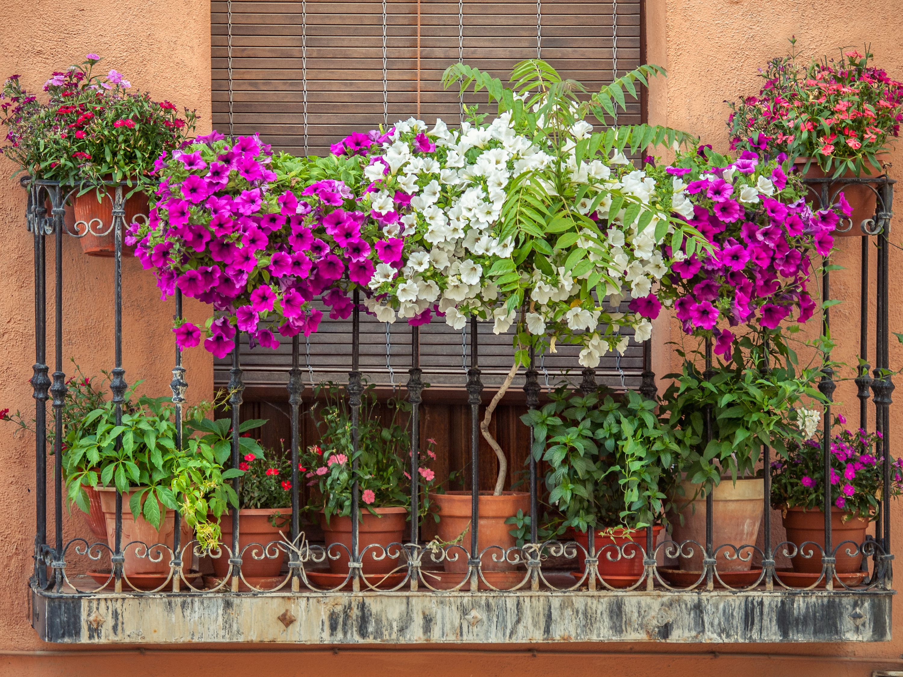 Flowers on the balcony.