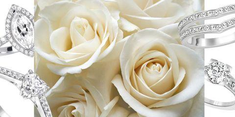Petal, Yellow, Flower, Garden roses, Rose family, Flowering plant, Still life photography, Rose order, Rose, Hybrid tea rose,