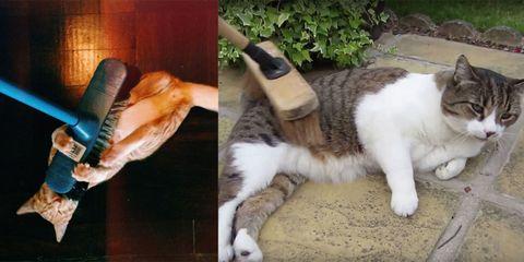 I Video Dei Gatti Che Amano Giocare Con Le Scope