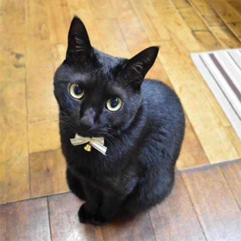 Oggi è il Black Cat Day: 20 micro pantere di Instagram che