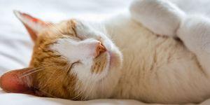 Ti basta seguire 10 piccole e grandi regole per dormire bene e meglio