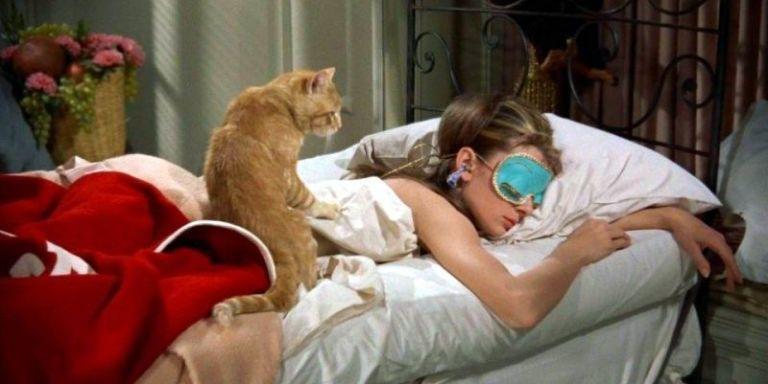 10 film con i gatti da vedere assolutamente