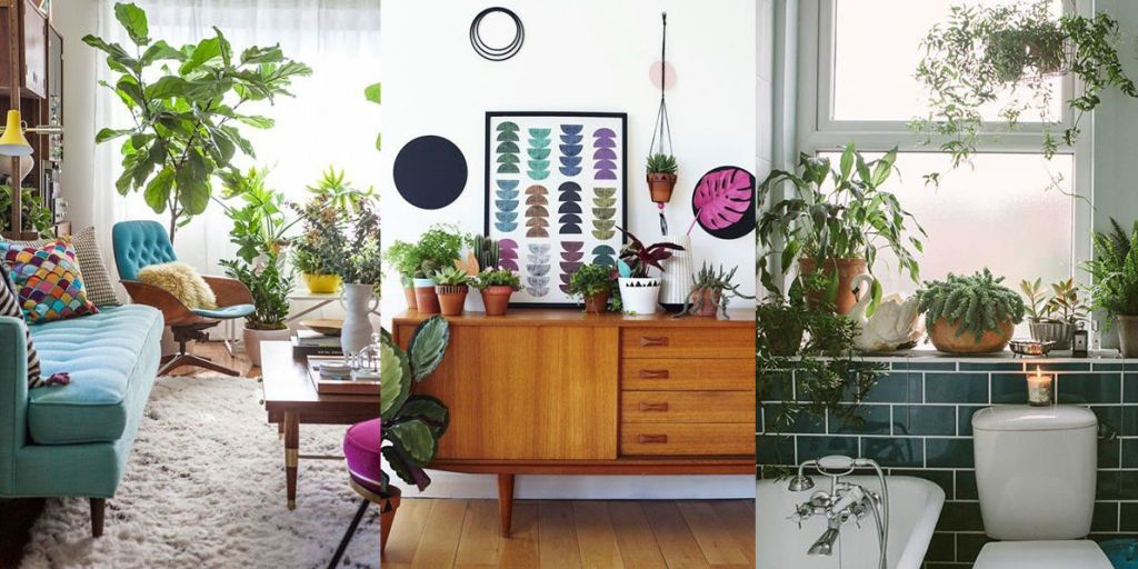 Piante In Casa : Modi per usare le piante e trasformare la tua casa i