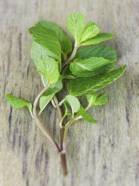"""<p>La <strong data-redactor-tag=""""strong"""" data-verified=""""redactor"""">menta</strong>,<br> anche se gli usi medicinali di questa pianta sono noti, è ampiamente utilizzata nella preparazione di infusi. Si possono fare anche caramelle, gelati, insalate, zuppe, aromi per carni. Si usa da aggiungere al mojito per darle l'aroma distintivo.</p>"""