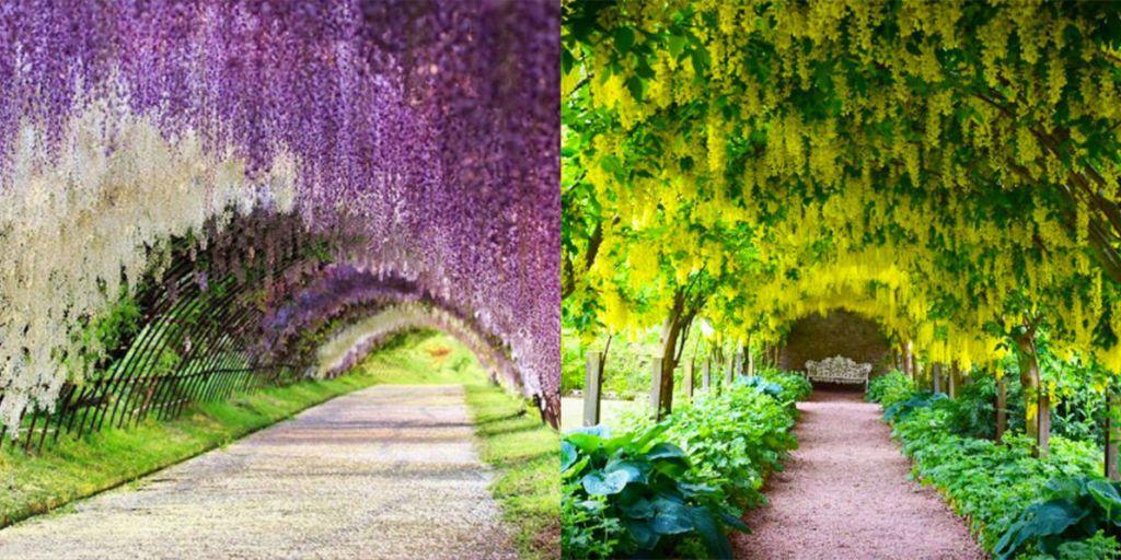 I tunnel di fiori pi belli del mondo for I telefoni piu belli