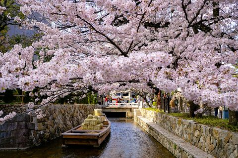 Takasegawa Ichino-Funairi, Japanese national memorial, 1st port near Nijo-Kiyamachi in Spring with cherry blossoms, in Kyoto Japan.