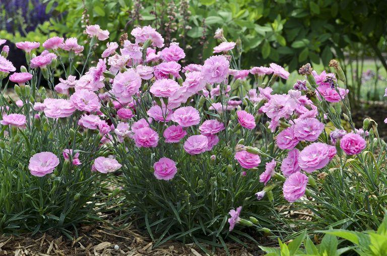 10 fiori profumatissimi per colorare il tuo terrazzo