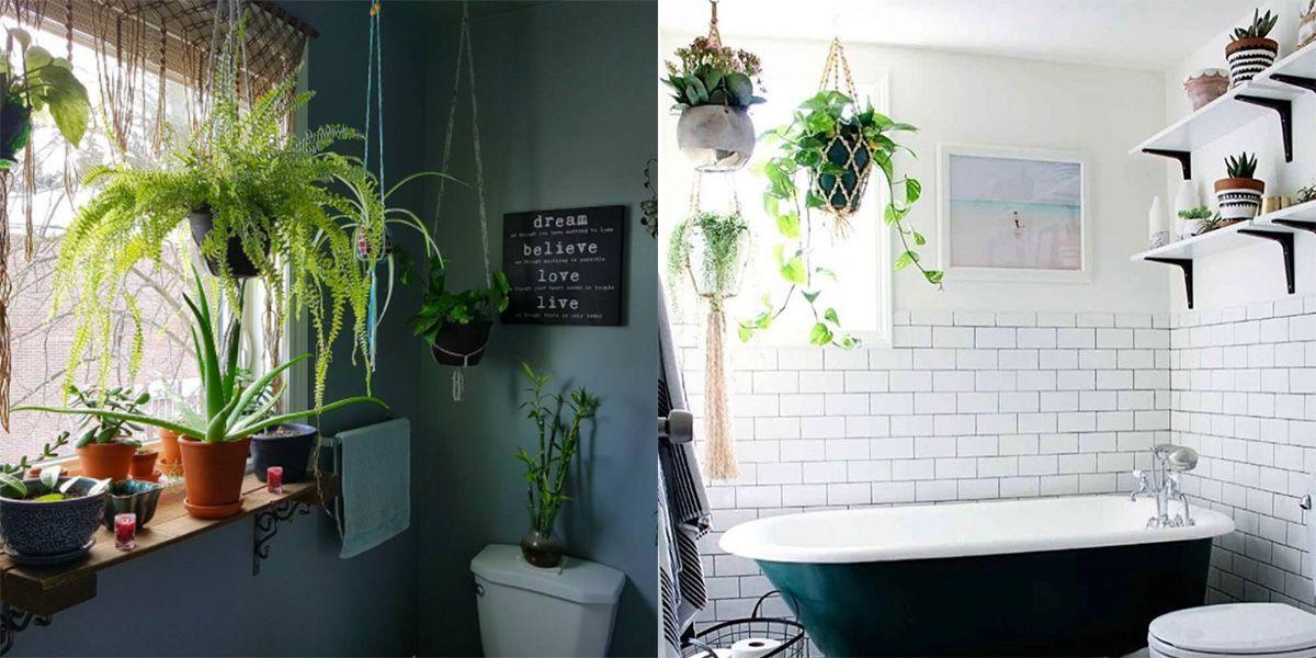 Le piante da bagno da avere in casa se non hai il pollice verde