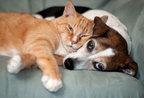 I Cani E I Gatti Riducono Il Tuo Stress Ogni Giorno Lo Dice La Scienza