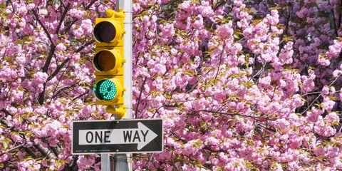 Flower, Spring, Plant, Purple, Blossom, Pink, Tree, Branch, Cherry blossom, Petal,