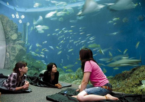 夜の水族館にドキドキ♡「鴨川シーワールド」で特別体験