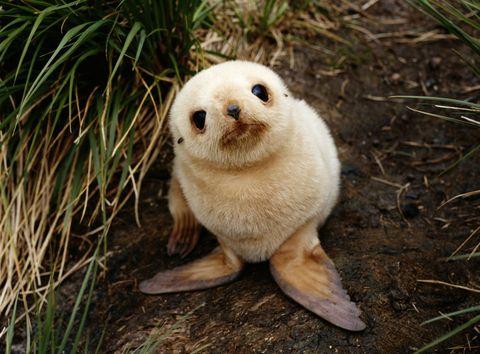 ポッケに入れたい♡動物の赤ちゃん写真集