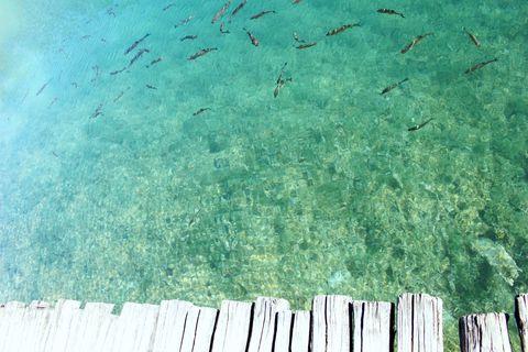 """<p>まさにクリスタルブルーの湖。魚や126種類の鳥類が生息しているんだとか。地元のおば様曰く、現在は遊泳禁止ですが、昔は自由に泳ぐことができたそう。魚を捕る鳥の親子を間近で見られるなど、大自然を満喫できます。ハイキングガイドさん曰く、常に違った場所に滝ができたりと、自然は変わり続けているので、常に異なる風景が見られるのが醍醐味とのこと。<span class=""""redactor-invisible-space"""" data-verified=""""redactor"""" data-redactor-tag=""""span"""" data-redactor-class=""""redactor-invisible-space""""></span></p>"""