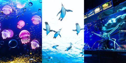 Water, Electric blue, Underwater, Organism, Marine biology, Graphic design, Art, Aquarium, Aquarium lighting, Graphics,