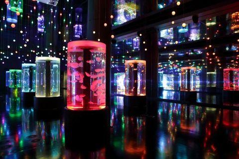 """<p>夜の水族館で、ちょっぴり大人のデートを楽しめるのが「アクアパーク品川」。プロジェクションマッピングやアートワークを駆使した最先端の演出が、暗闇の館内を艶やかに彩り、訪れるゲストらを魅了する。</p><p>さらに、館内にはバースペースが設けられ、カクテルやビールなどを販売。お酒を持ち歩きながら、ロマンティックに展示された海の生き物をゆったりと鑑賞することができる。デートの締めくくりには、ぜひ「ザ スタジアム」で開催されるドルフィンパフォーマンスに立ち寄ってみて♡<span class=""""redactor-invisible-space"""" data-verified=""""redactor"""" data-redactor-tag=""""span"""" data-redactor-class=""""redactor-invisible-space""""> </span>季節ごとに変わる音と光の演出は圧巻。</p><p><a href=""""http://www.aqua-park.jp/aqua/"""" target=""""_blank"""" data-tracking-id=""""recirc-text-link"""">アクアパーク品川</a></p>"""
