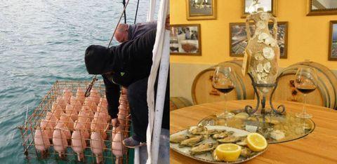 海中からテーブルへ!「海の中のワイナリー」