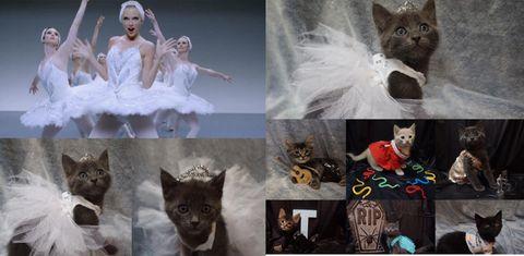 テイラー・スウィフトの衣装を着た猫