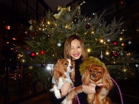Dog, Canidae, Christmas, King charles spaniel, Dog breed, Cavalier king charles spaniel, Christmas ornament, Spaniel, Tree, Sporting Group,