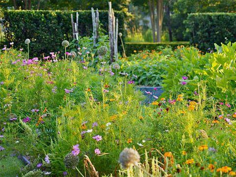 Plant, Shrub, Flower, Plant community, Garden, Flowering plant, Wildflower, Meadow, Groundcover, Grass family,