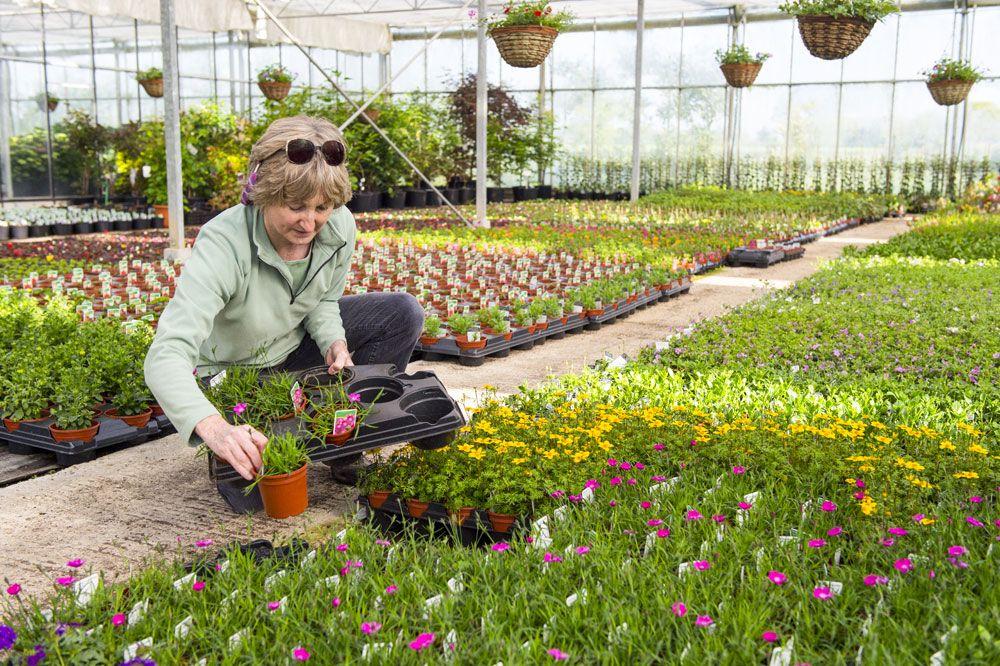 Ping The Garden Nursery